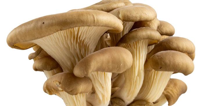 Mushrooms (Oyster)