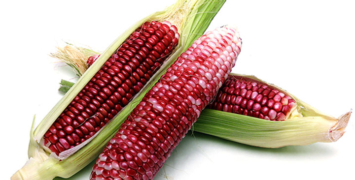 Corn (Sweet Red)