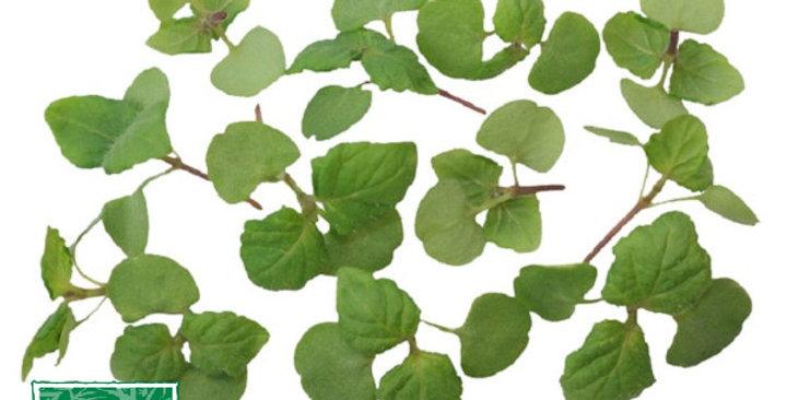 Microgreens (Shiso, Green)