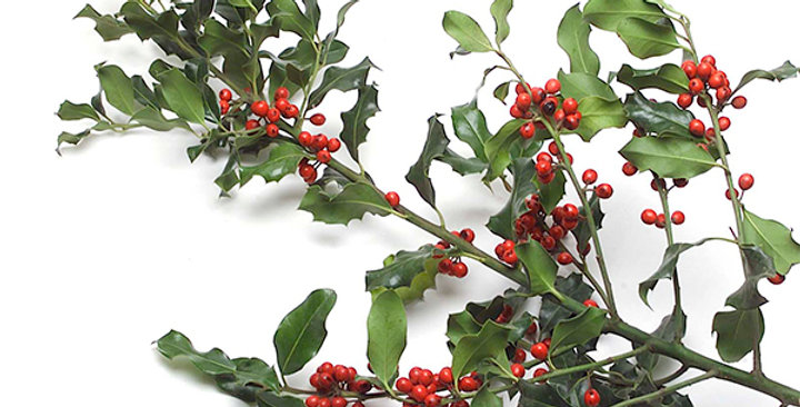 Ornamental (Holly Boughs)