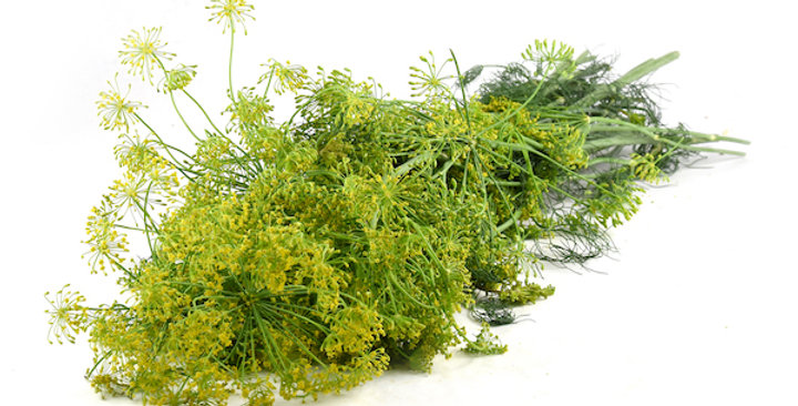 Dill (Crown)