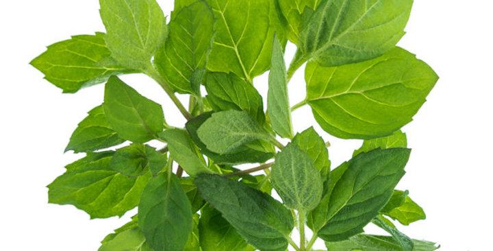 Microgreens (Mint)