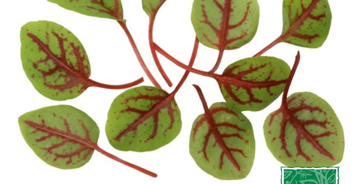 Microgreens (Hearts on Fire™)