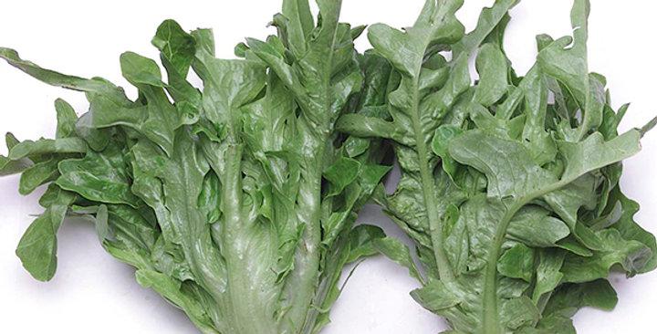 Baby Lettuce (Oakleaf, Green)
