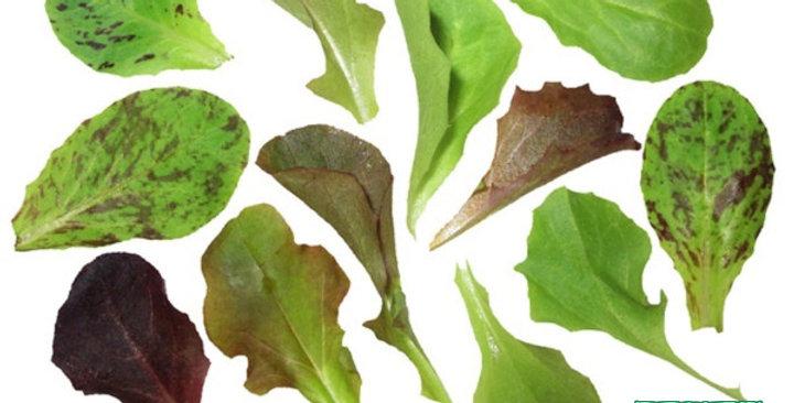 Microgreens (Lettuce Gourmet Mix)