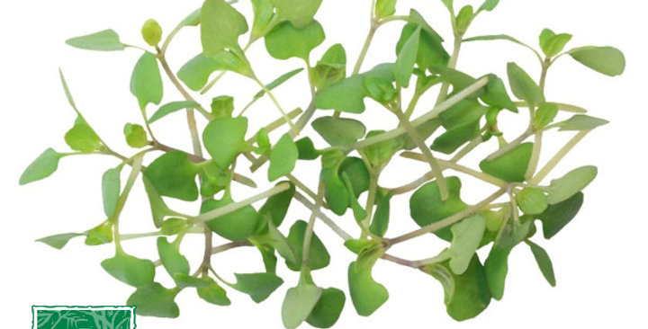 Microgreens (Basil, Cinnamon™)