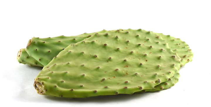 Cactus Leaves (Cleaned)