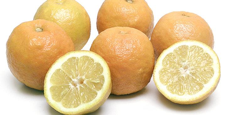 Oranges (Seville)