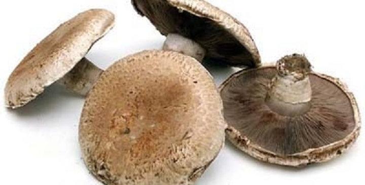 Mushrooms (Portobello)