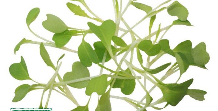 Microgreens (Mizuna)