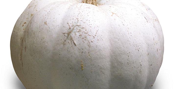 Pumpkins (White)