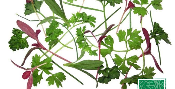 Microgreens (Fines Herbes™)