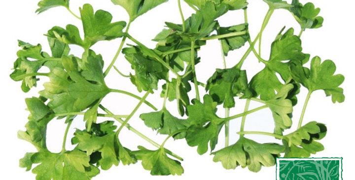Microgreens (Parsley, Curly)