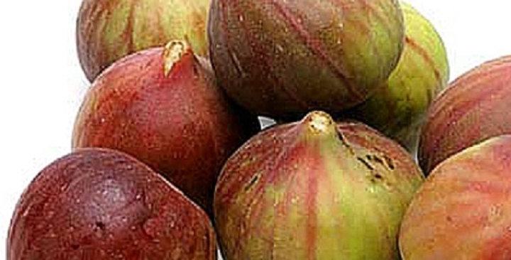 Organic Figs (Brown Turkey)