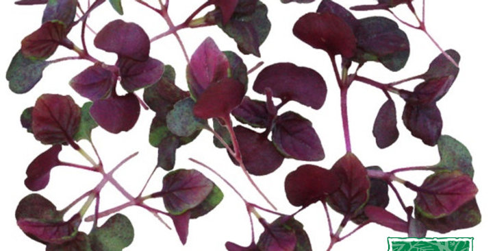 Microgreens (Shiso, Red)