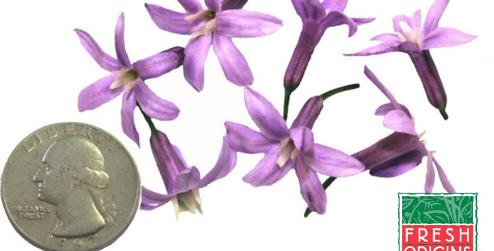 Edible Flowers (Garlic Flower)