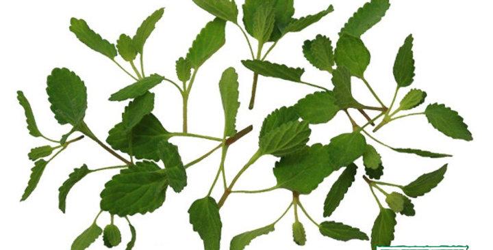 Microgreens (Mint, Lavender™)