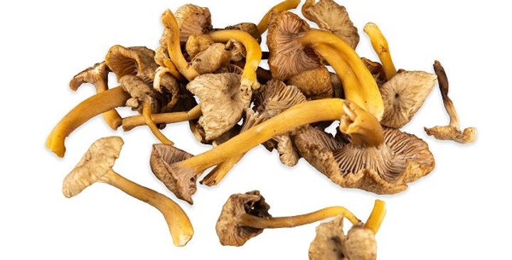 Mushrooms (Chanterelle, Yellow Foot)