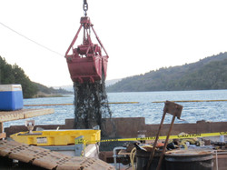Dredging and Clam bucket