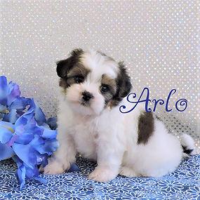 Arlo-3.jpg