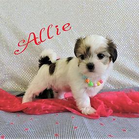 Allie-7.jpg