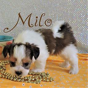 Milo-3.jpg-4.jpg