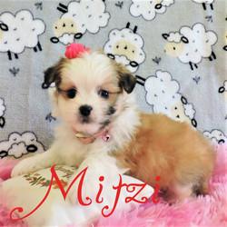 Mitzi ~ F ~ Malshi
