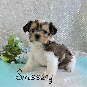 Smooshy-4.jpg-2.jpg