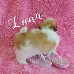 Luna ~ F ~ Malshi