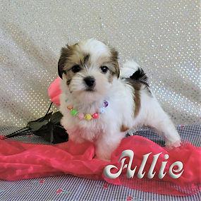 Allie-6.jpg
