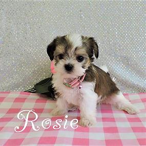 Rosie-5.jpg-8.jpg