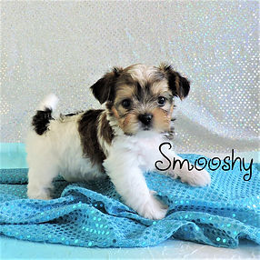 Smooshy-2.jpg-6.jpg