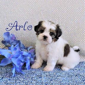 Arlo-2.jpg