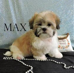 Max  ~ M ~ Malshi
