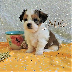 Milo-6.jpg