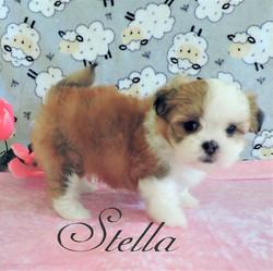 Stella ~ F ~ Malshi