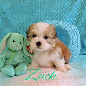 Zack ~ M ~ Malshi