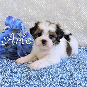 Arlo-4.jpg