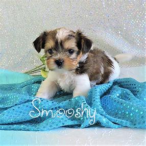 Smooshy-3.jpg-4.jpg
