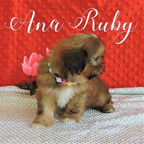 Ana-Ruby ~ F ~ Malshi