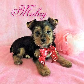 Mabry ~ F ~ Yorkieg