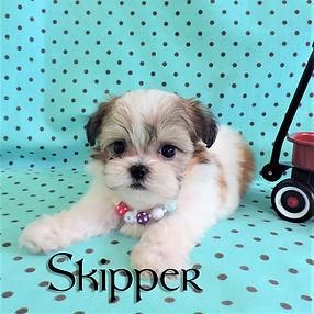 Skipper ~  M ~ Malshi
