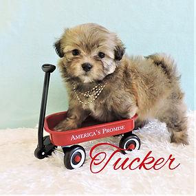 Tucker ~ M ~ Malshi
