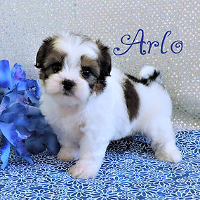 Arlo-1.jpg