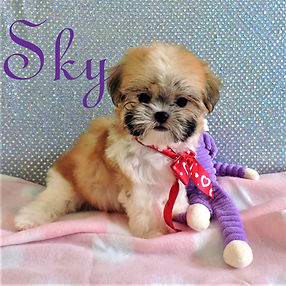 Sky  ~ F ~ Malshi