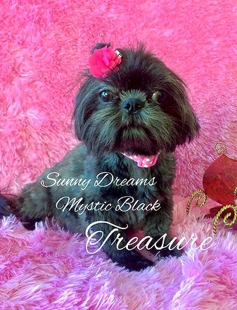 Sunny Dreams Mystic Black Treasure