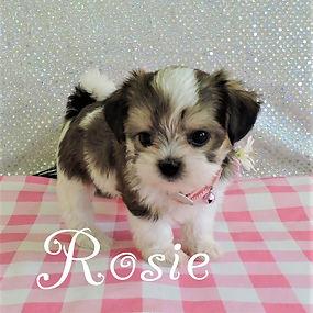 Rosie-4.jpg-9.jpg