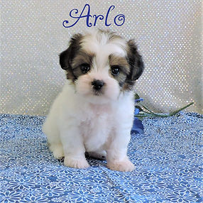 Arlo-5.jpg