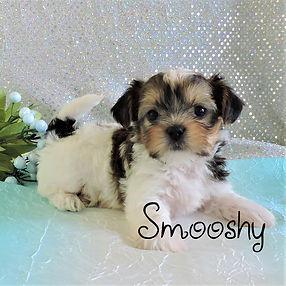 Smooshy-5.jpg-1.jpg