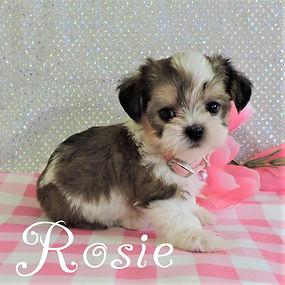 Rosie-3.jpg-1.jpg